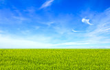 Green field under blue clouds sky. Beauty nature background