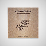 Herbs and Spices Collection - Codonopsis