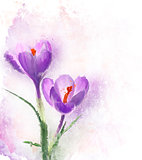 Crocus Flowers Watercolor