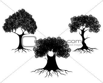Three trees silhouettes