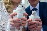 pigeons in hands