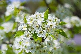 Blooming Flowers on Tree