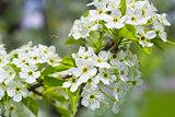 Bee Pollinating Blooming Flowers