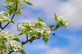 Blooming Tree Flowers in the Sky