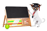 school teacher dog