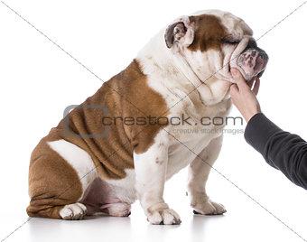 animal bond