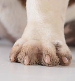 dirty dog feet