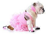 bulldog ballerina