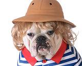 dog wearing clothing