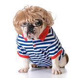 dog dressed like a human