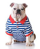 dog wearing a shirt