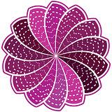 Purple flower on a white background