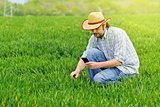 Farmer Taking Photo of Young Wheat Cultivation Field