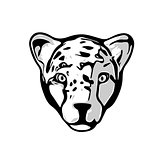 Head of Cheetah