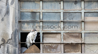 Abandoned cat over warehouse broken window