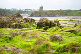 ballybunion castle algae covered rocks