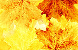 Grunge background with autumn leaves