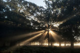 Sun beams shining through trees in forest on foggy Autumn Fall
