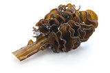 japanese seaweed, mekabu, wakame root