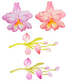 Watercolor pink and red orchids