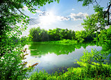 Green spring on river