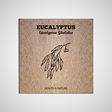 Herbs and Spices Collection - Eucalyptus