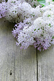 branches of blooming lilacs on an old wooden background