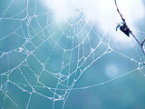 Cobweb in the forest