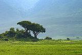 Inside Ngorongoro crater in Tanzania