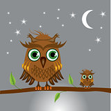 Brown owls sitting on a branch at night
