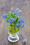 forget-me-not [Myosotis sylvatica]