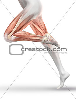 3D Female figure running with partial muscle map