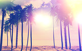 3D palm trees and ocean with vintage effect