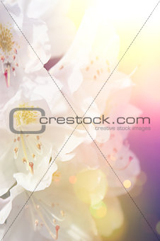Floral background with vintage effect
