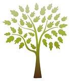 Chocolate Lime Tree