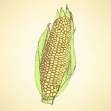 Sketch corn cob in vintage style