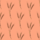 Sketch wheat bran in vintage style