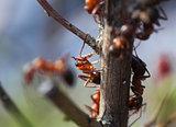 Ants in garden