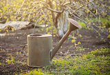 Old watering can in garden.