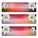 flower header with blossom orchid