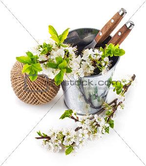 Blooming branch plum in bucket with garden tool