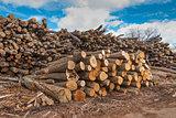 Cut wooden logs