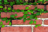 Brick wall with green leafs