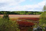 swamp & forest Sweden