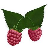 Two fresh raspberry.