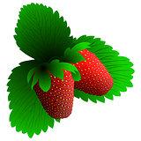 Two fresh strawberry