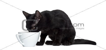 Black cat dirnking in a cup in front of a white background