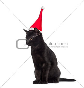 Black kitten sitting and wearing a Santa hat in front of a white