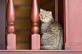 domestic tabby cat in home interior
