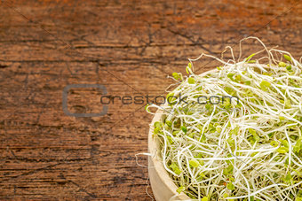 broccoli and clover sprouts